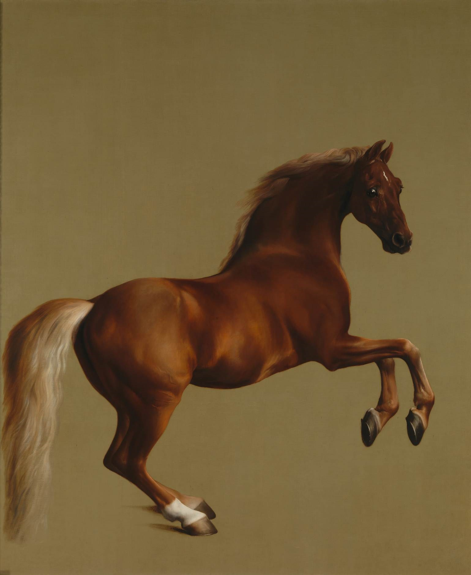 Stubbs and the Anatomy of the Horse | mamo.org.uk